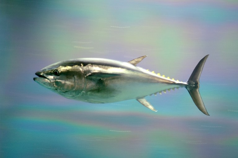 Did You Know? Fish Are Not Producers of Omega-3 Fatty Acids