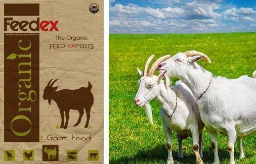 Organic Goat Feed - Feedex Organic Livestock Feed