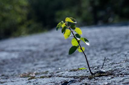 Enfrentar dificuldades e ser resiliente