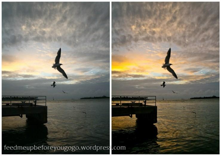 Vögelkeywest-1
