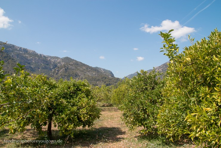 mallorca-food-travel-guide-soller-port-de-soller-feed-me-up-before-you-go-go-32