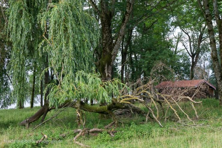 Natur auf der Krautinsel im Chiemsee Bayern