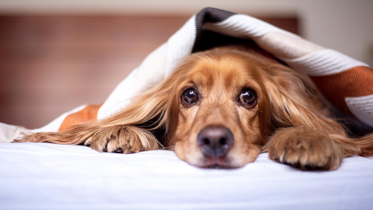 4 Best Dog Beds - Heated, Bolster, Cozy Cave, and Washable