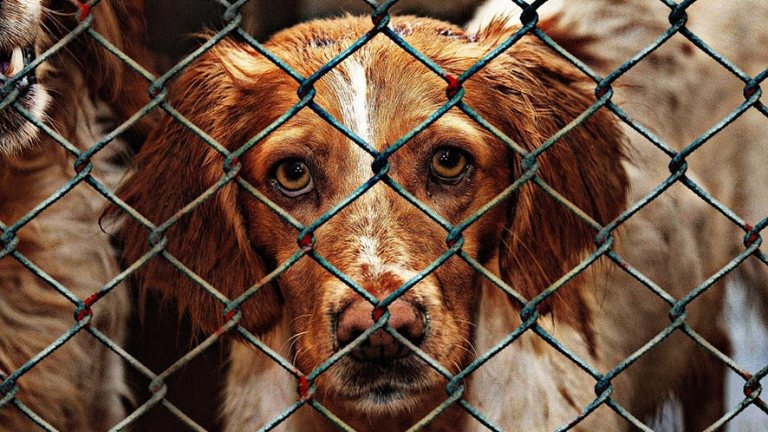 Dog abuse Facts: How can you prevent it?