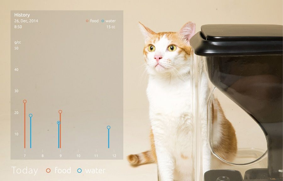 Finding The Best Automatic Cat Feeder Available