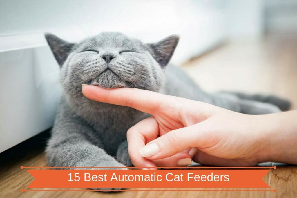 15-Best-Automatic-Cat-Feede
