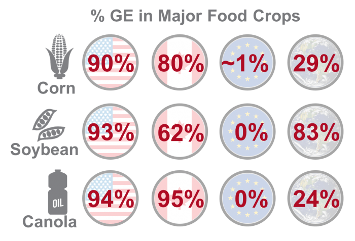 Percent genetically engineered crops comprise major food crops in United States, Canada, Europe and globally, www.feedthemwisely.com