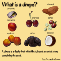 What is a Drupe?