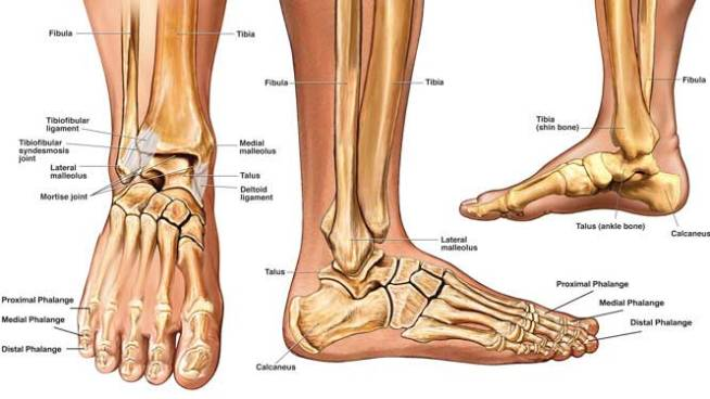 ankle-fractures-page