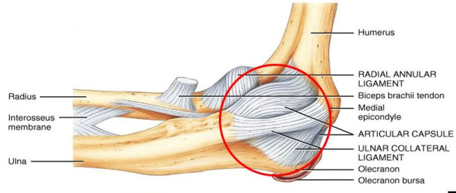 lateral-ulnar-collateral-ligament-(ucl)