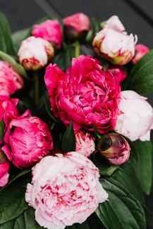 love flowers summer garden