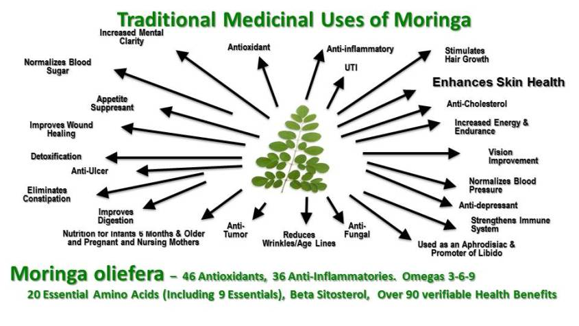 traditional-uses-of-moringa