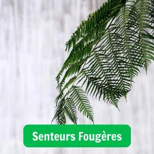 Image illustrant un parfum aux senteurs fougères
