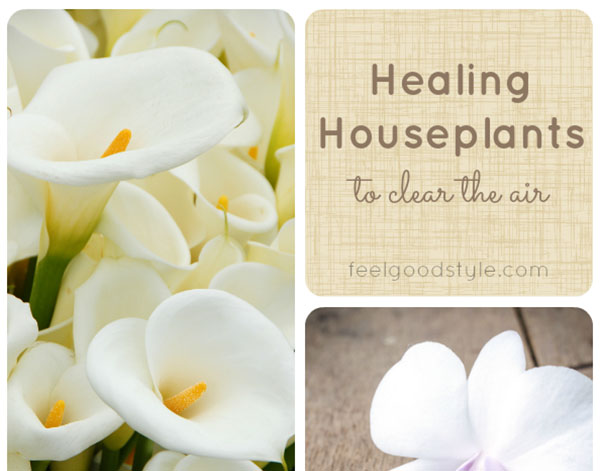 Healing Houseplants to Clean Your Home's Indoor Air