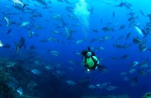 Azores Scuba Diving