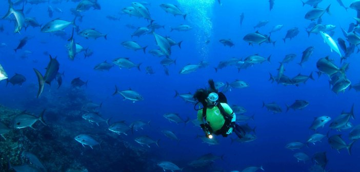 Azores nominated world's best diving destination at World Travel Awards