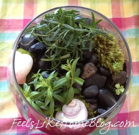 how to make a terrarium with herbs