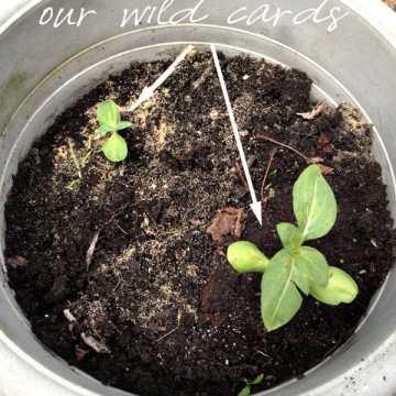 Garden Wild Cards