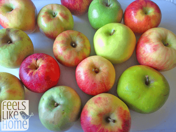 A bunch of different kinds of apples