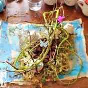 An Island Grows Book and Volcanic Island Craft