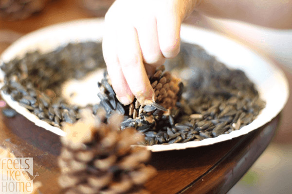 Roll the peanut buttery pine cones in the bird seed