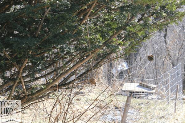 diy-pine-cone-bird-feeders-swinging