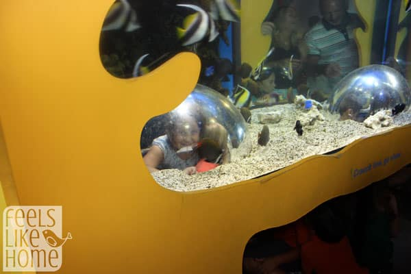 Adventure Aquarium in Philly review - bubble viewer