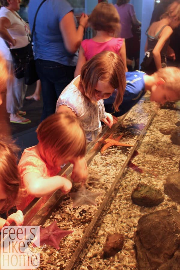 Adventure Aquarium in New Jersey review - touch tank