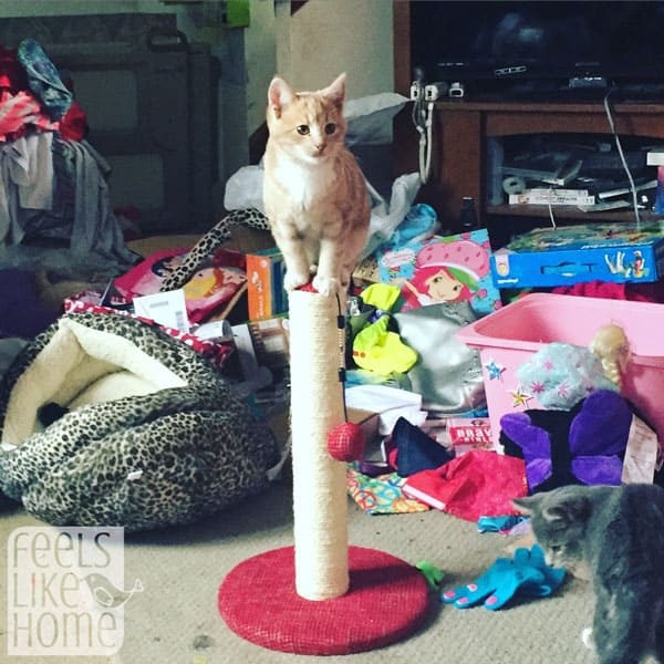 A kitten on top of a scratching post