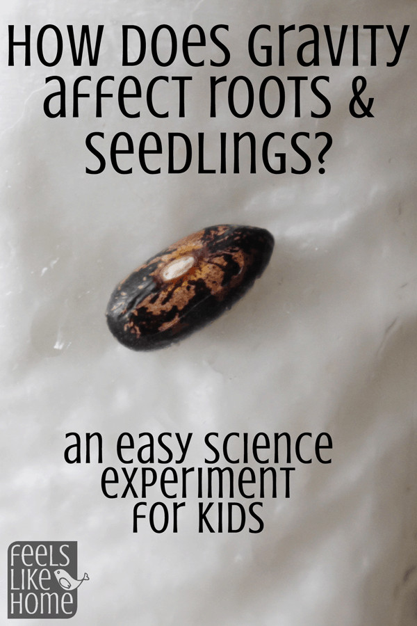 A close up of a seed