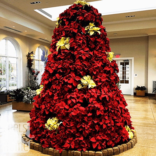 hershey-conservatory-butterfly-house-pointsettia-tree