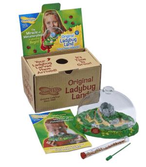 A ladybug kit