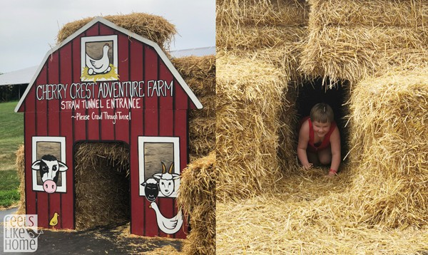 A collage of photos from Cherry Crest Adventure Farm