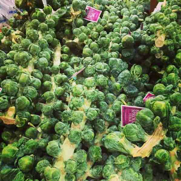 Brussels sprouts on the stalks