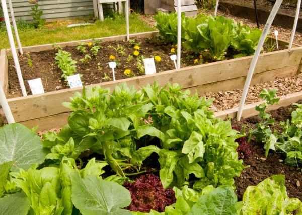 A raised garden