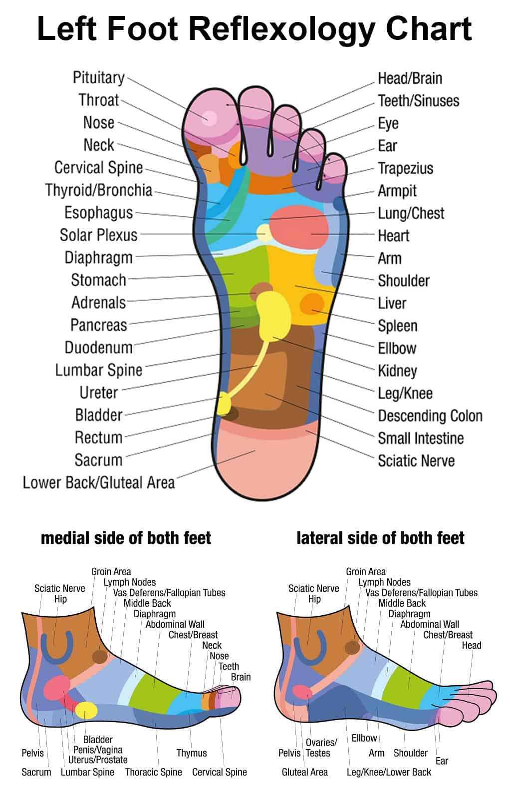 Lymph Node Foot Diagram - Collection Of Wiring Diagram •