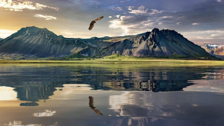 Ein fliegender Adler über einem spiegelnden See, im Hintergrund Berge