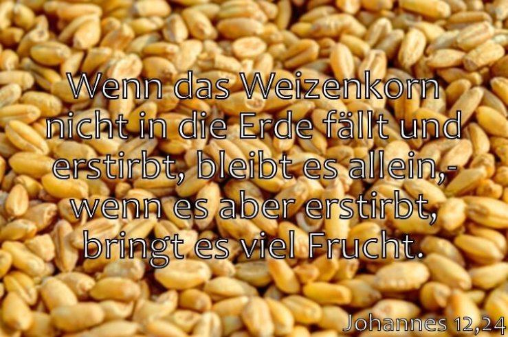 Wochenspruch 13 / 2017: Johannes 12,24: Wenn das Weizenkorn nicht in die Erde fällt und erstirbt, bleibt es allein; wenn es aber erstirbt, bringt es viel Frucht.