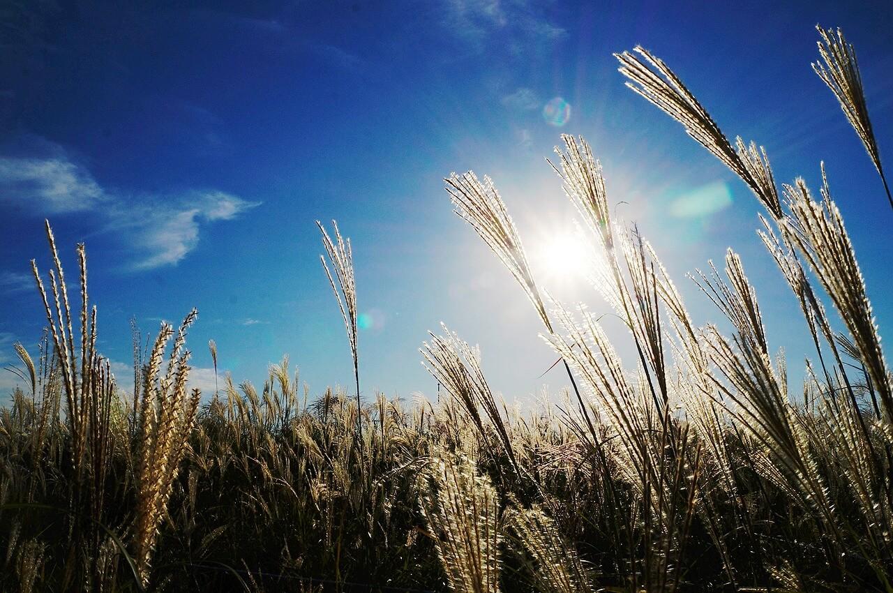 """Symbolbild """"Tut Buße, denn das Himmelreich ist nahe herbeigekommen!"""": Nahaufnahme Reed-Graß vor Sonne im Himmel"""