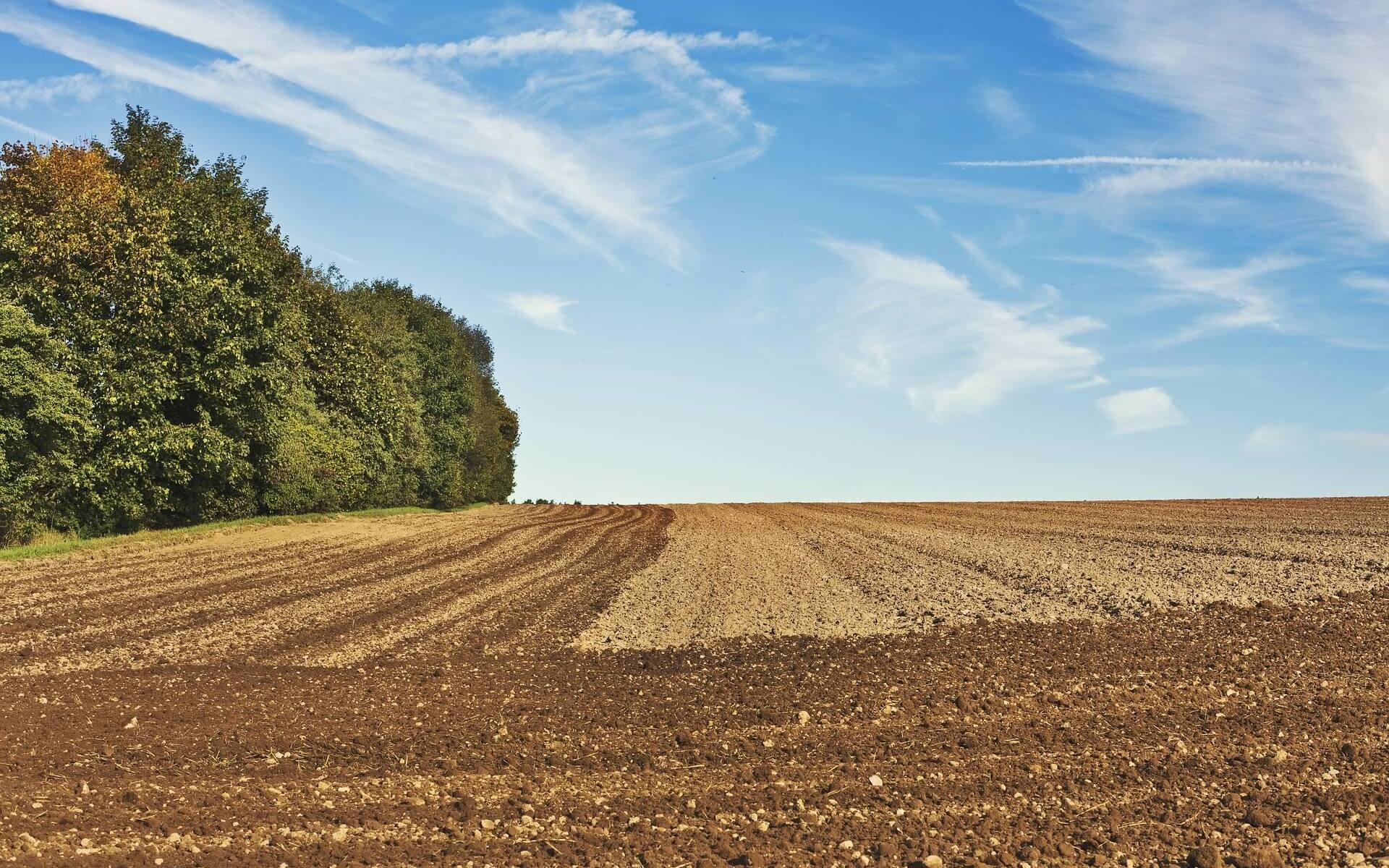 """Symbolbild """"Ein guter Anfang genügt nicht! - Das vierfache Ackerfeld"""": Aufnahme eines Ackers am Waldrand"""