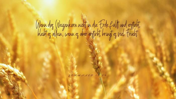 Wenn das Weizenkorn nicht in die Erde fällt und erstirbt, bleibt es allein; wenn es aber erstirbt, bringt es viel Frucht. - Johannes 12,24