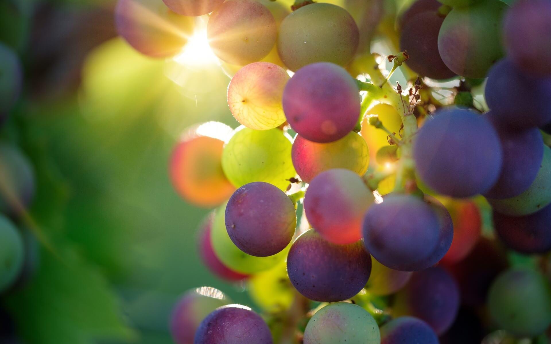Trauben, Symbol für Fruchtbarkeit in der Welt