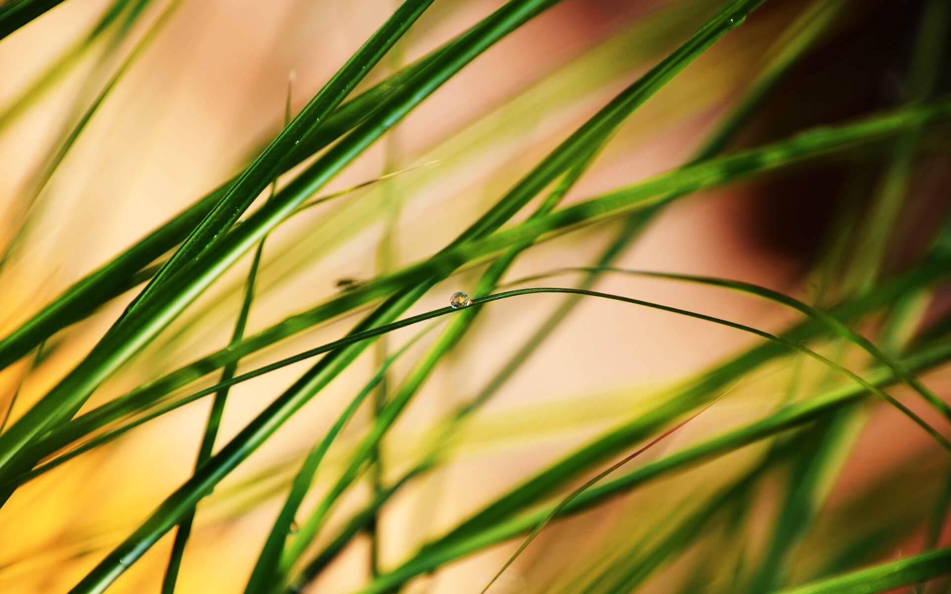 Symbolbild: Gottes Wille und unser Auftrag. Gras im Sonnenuntergang, Nahaufnahme