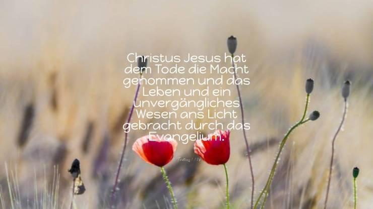 Christus Jesus hat dem Tode die Macht genommen und das Leben und ein unvergängliches Wesen ans Licht gebracht durch das Evangelium. - 2.Timotheus 1,10b