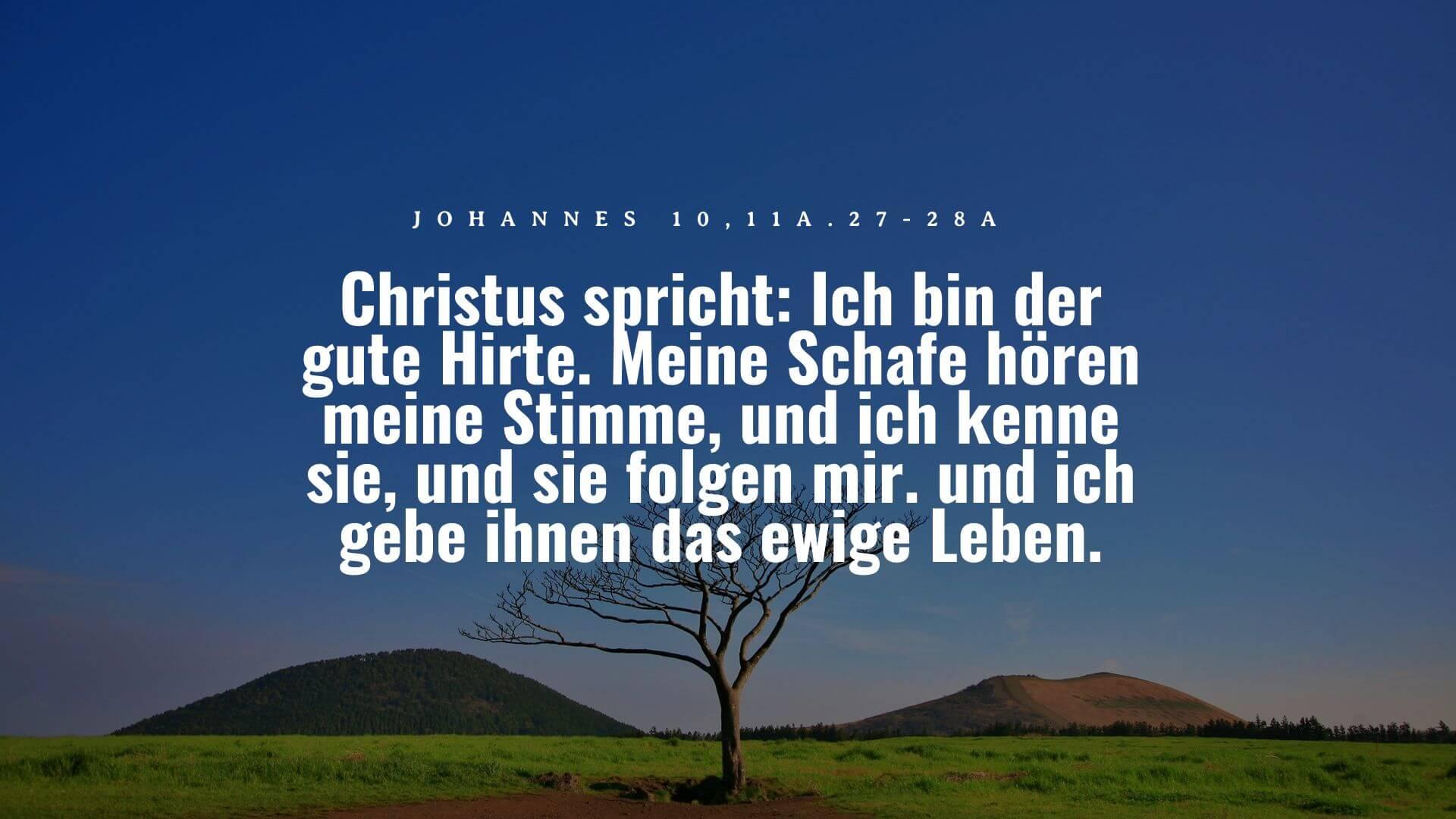 Christus spricht: Ich bin der gute Hirte. Meine Schafe hören meine Stimme, und ich kenne sie, und sie folgen mir. und ich gebe ihnen das ewige Leben. - Johannes 10,11a.27-28a