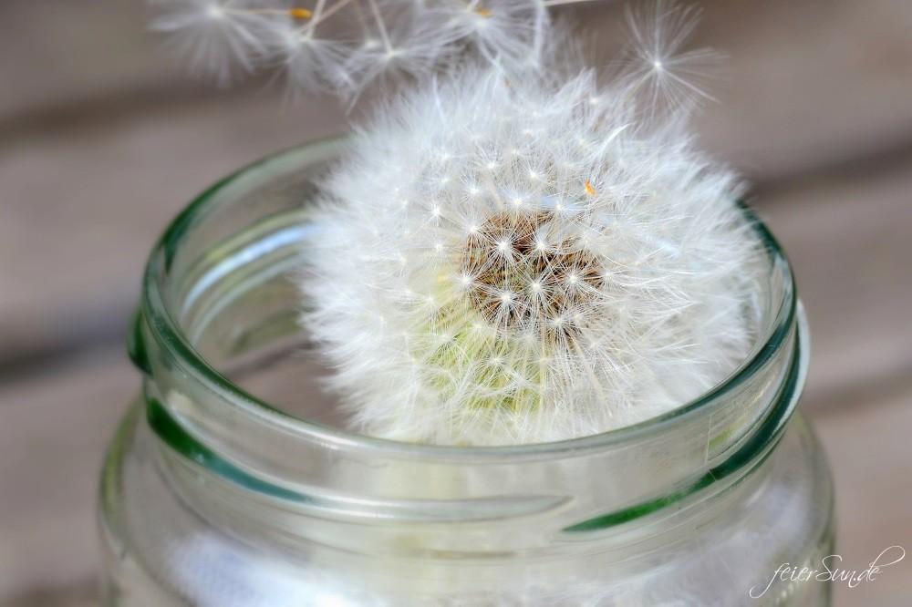 Pusteblumen Make a wish - Pusteblumen im Glas lassen die Magie wieder aufleben