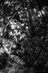 859_falls_Catlins_Forrest
