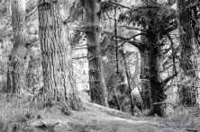 1310_Woodend_Beach