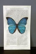 Antique book paper prints - blue butterfly £12.00 - Rockett St George
