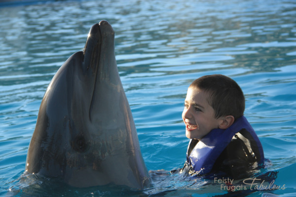 cabo dolphin encounter